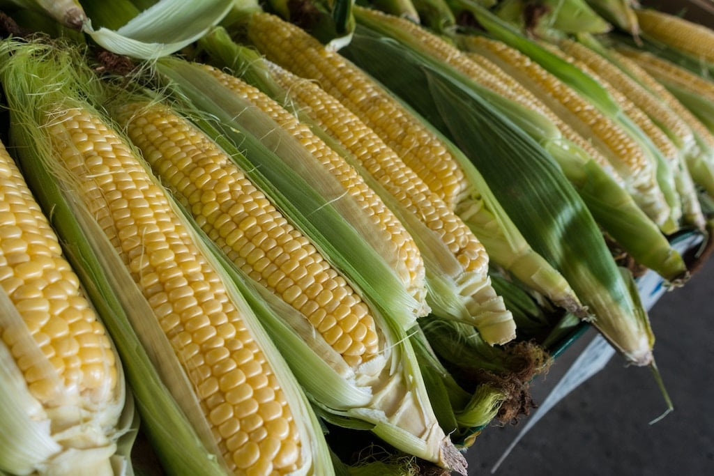 8 GMO foods to avoid to have a better health corn