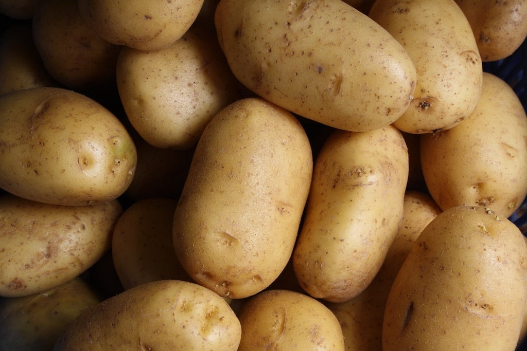 8 GMO foods to avoid to have a better health potato